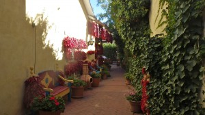 New Mexico courtyard